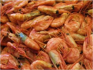 Local Wild Caught Shrimp